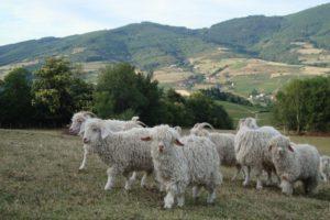 WE5 - ferme almathee