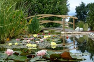 jardin s lotus principale